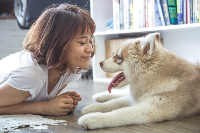 Pet Health Insurance - Personal Insurance | MyTPG